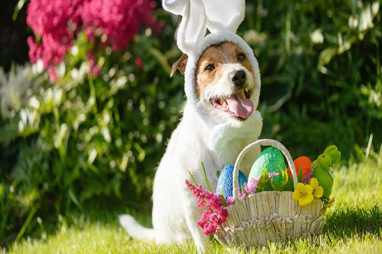 Dog-Easter-Basket-HP-long.jpg