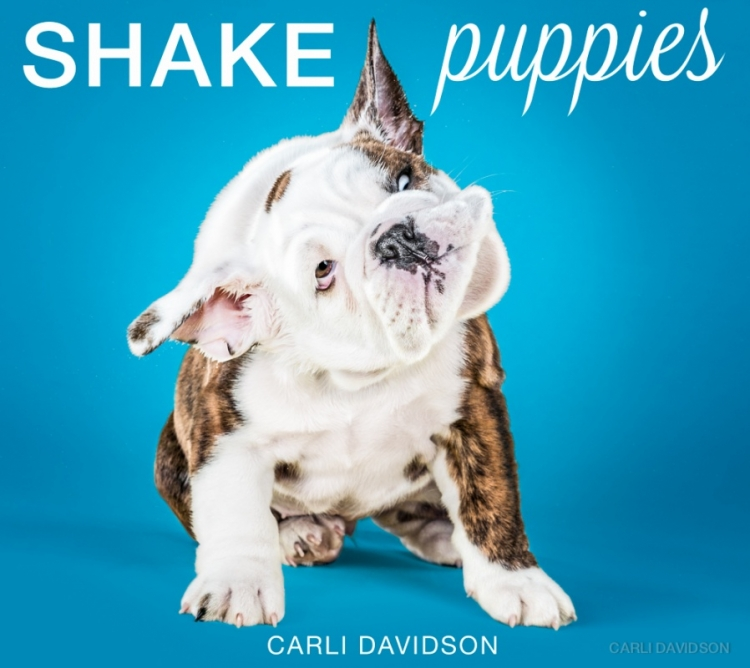 shakepuppies5.jpg