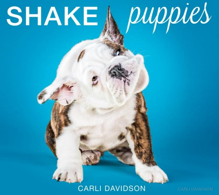 shakepuppies5.jpg